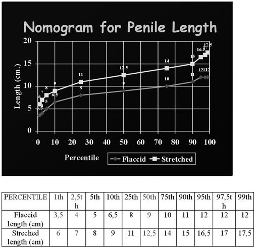 pénisz méret aránya