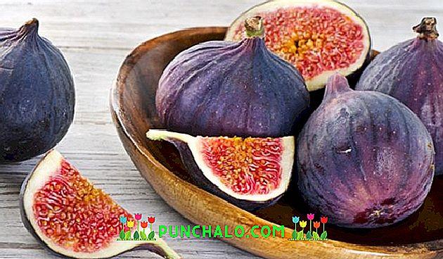 Természetes viagra – gyógynövényes receptek | zedbike.hu