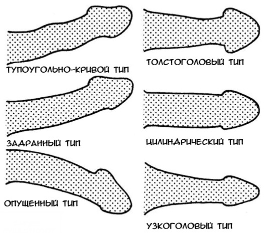 pénisz felálló görbe