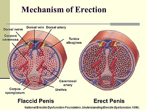hogyan lehet a pénisz hosszú ideig állni