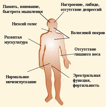 A test serdülőkori változásai