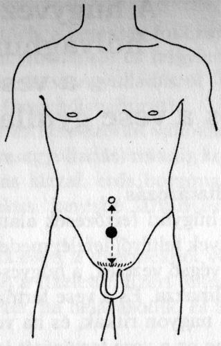 a pénisz növekedési pontjai