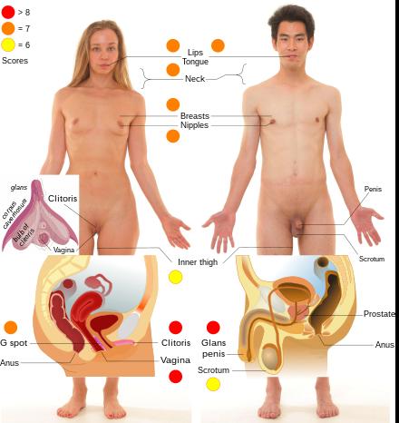 Erogén zónák a férfi testen